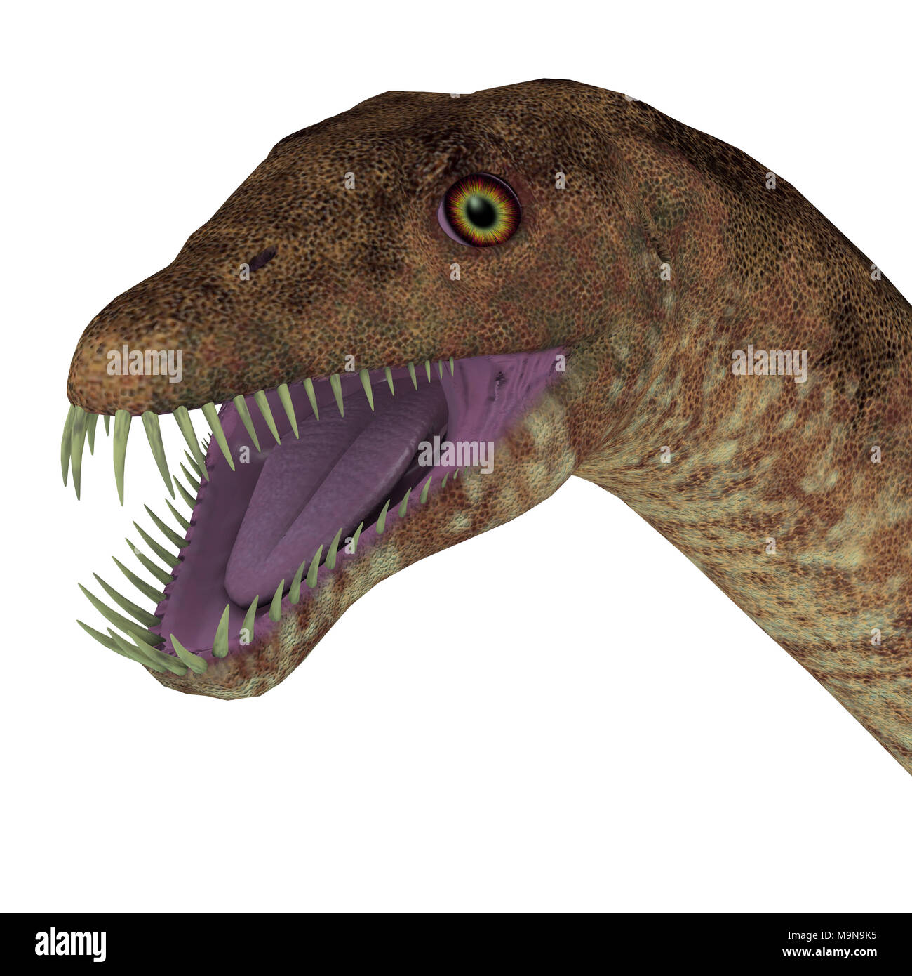Tanystropheus Dinosaur Head - Tanystropheus was a marine predatory reptile that lived in the Triassic Seas of Europe and the Middle East. - Stock Image