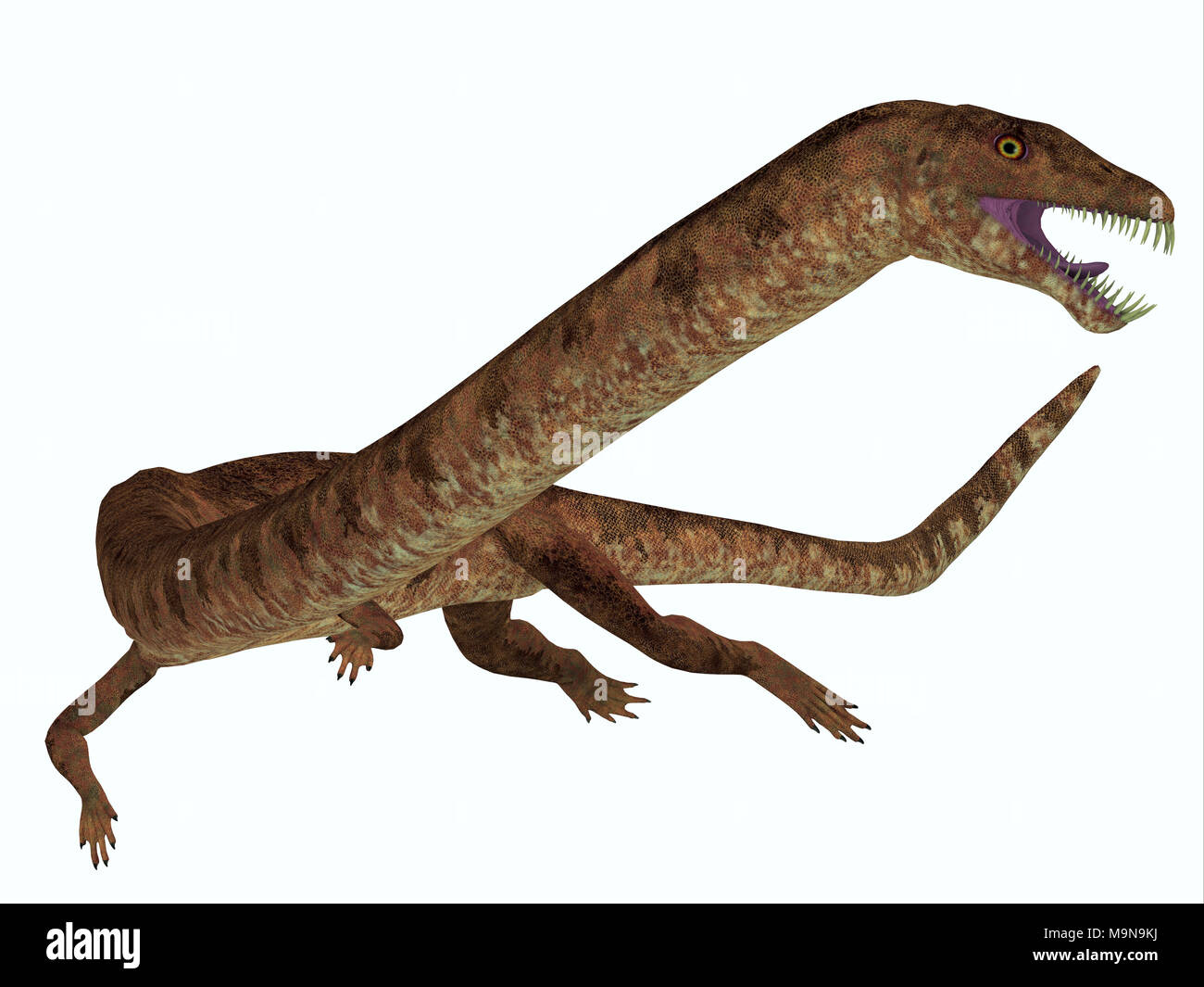 Tanystropheus Dinosaur on White - Tanystropheus was a marine predatory reptile that lived in the Triassic Seas of Europe and the Middle East. - Stock Image