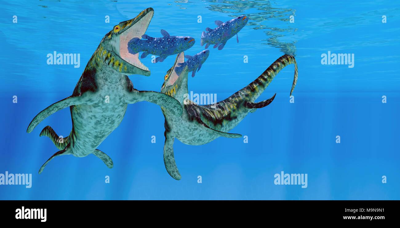 Tylosaurus Marine Reptiles - Coelacanth fish become prey to a pair of Tylosaurus marine reptiles in the Western Interior Seaway of North America. - Stock Image