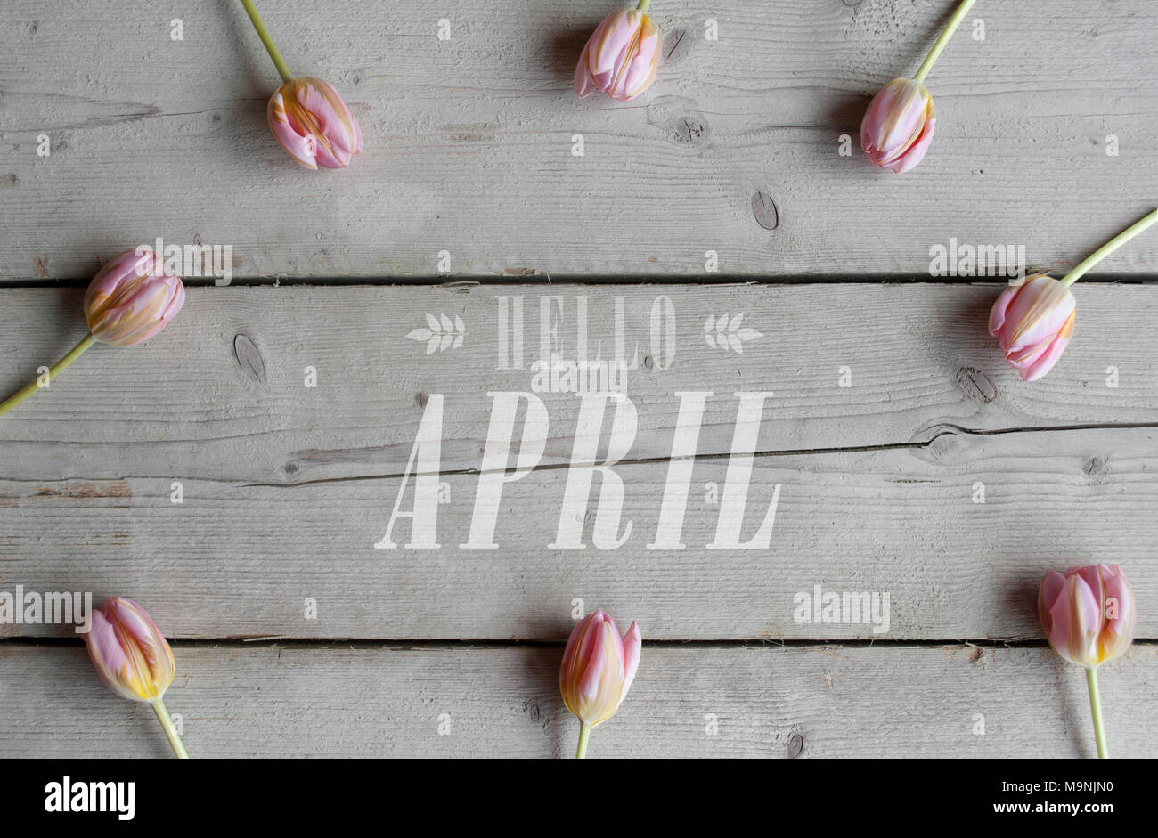 top view of pink tulips on vintage wooden ground, with text hello april - Stock Image