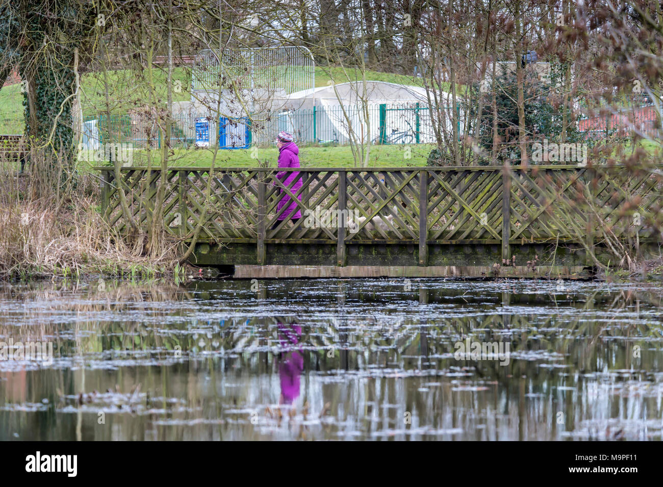 Melton Mowbray 27th March 2017: Chilly day for urban wildlife and park visitors  at the town center pond. Clifford Norton NPA Image Live News. Credit: Clifford Norton/Alamy Live News - Stock Image