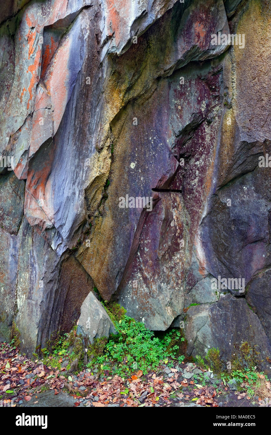 A close up semi abstract view of a rugged rock face in the English Lake District. - Stock Image