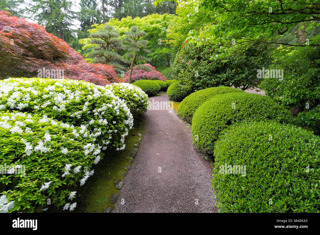 Delicieux Strolling Garden Path With Trees And Shrubs In Japanese Garden Suring  Spring Season