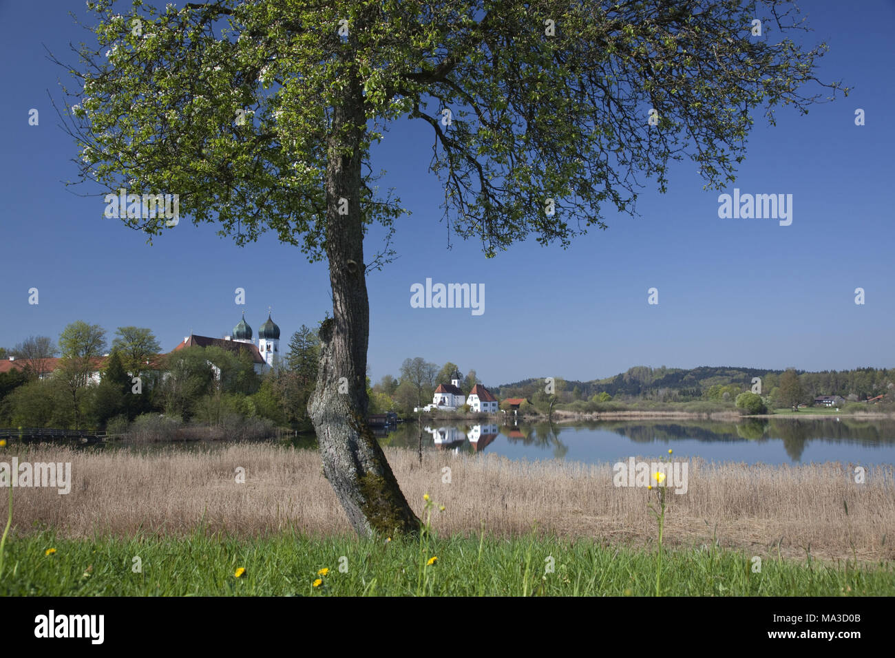 abbey of Seeon in the abbey lake, Seeon-Seebruck, Chiemgau, Upper Bavaria, Bavaria, South Germany, Germany, - Stock Image