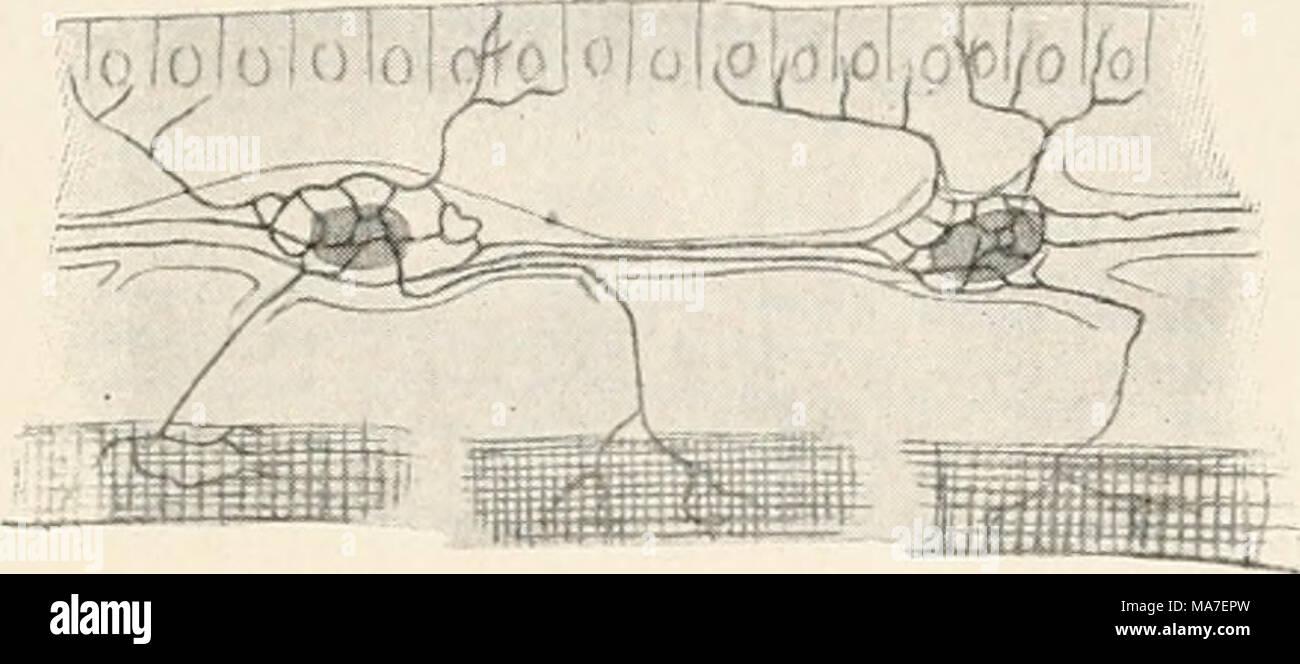 Tolle Zellen Anatomie Und Physiologie Fotos - Menschliche Anatomie ...