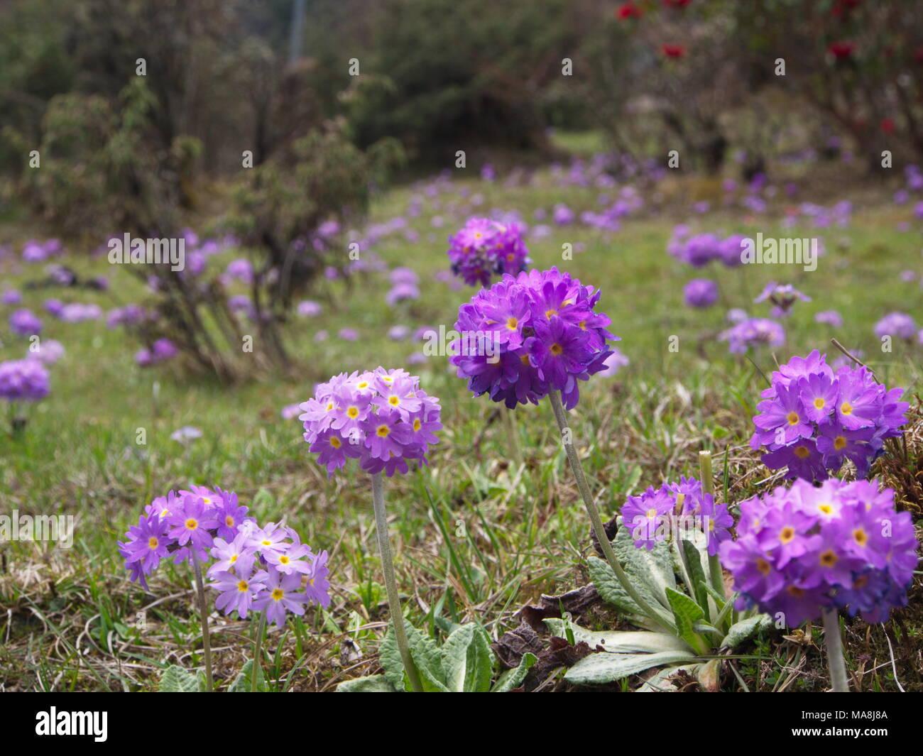Old Fashioned Beautiful Flower India Arie Lyrics Frieze Images For