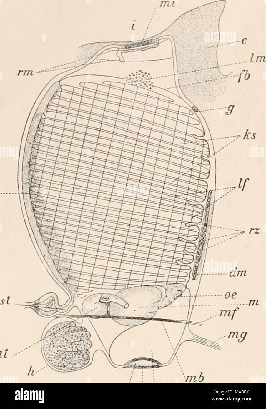Ausgezeichnet Fußanatomie Bogen Ideen - Anatomie Ideen - finotti.info