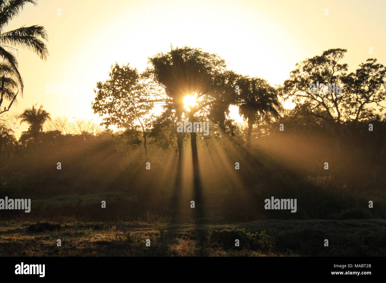 Sunburst, daybreak, sunrise, sun rays, sunburst behind tree, nature photography, nature, wilderness, Pantanal, Brazil, Mato Grosso, South America, - Stock Image