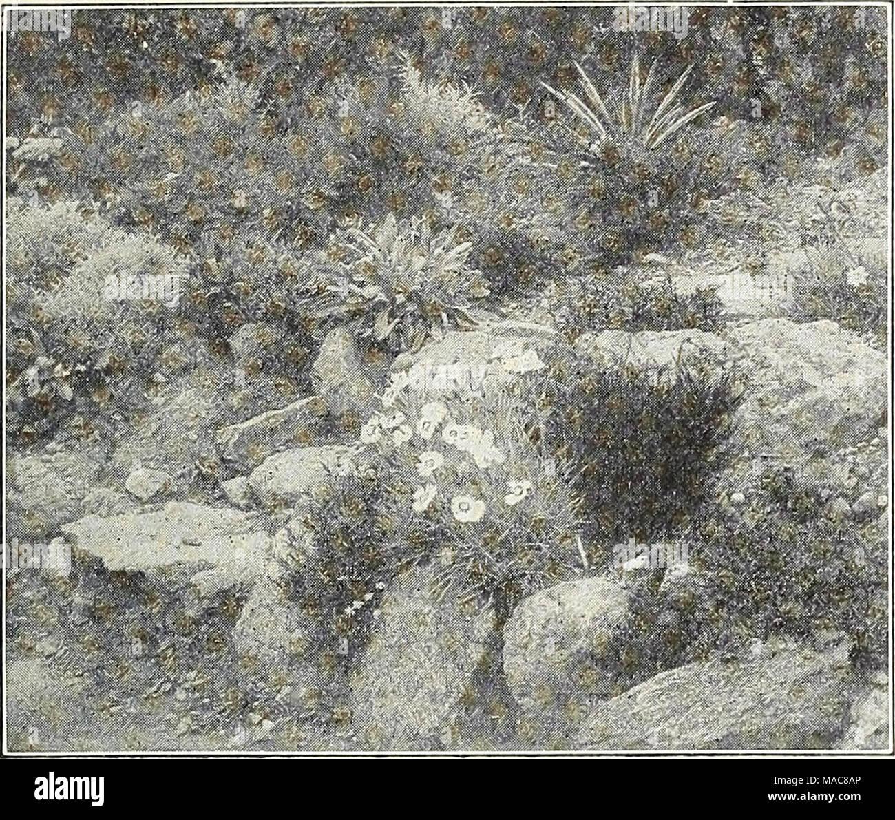 Dreers Midsummer List 1931 A Pretty Little Rock Garden