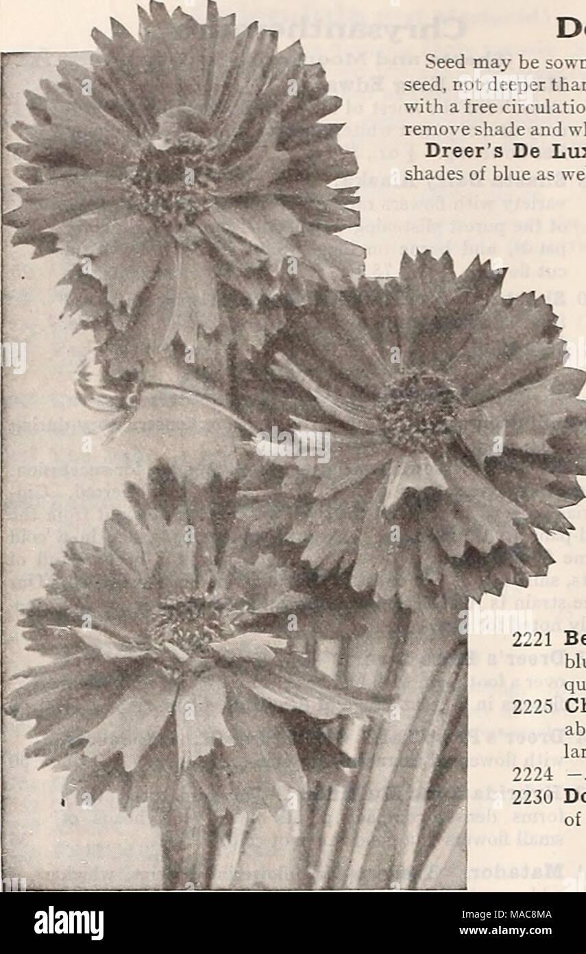 Dreers Midsummer List 1929 New Double Flowering Coreopsis