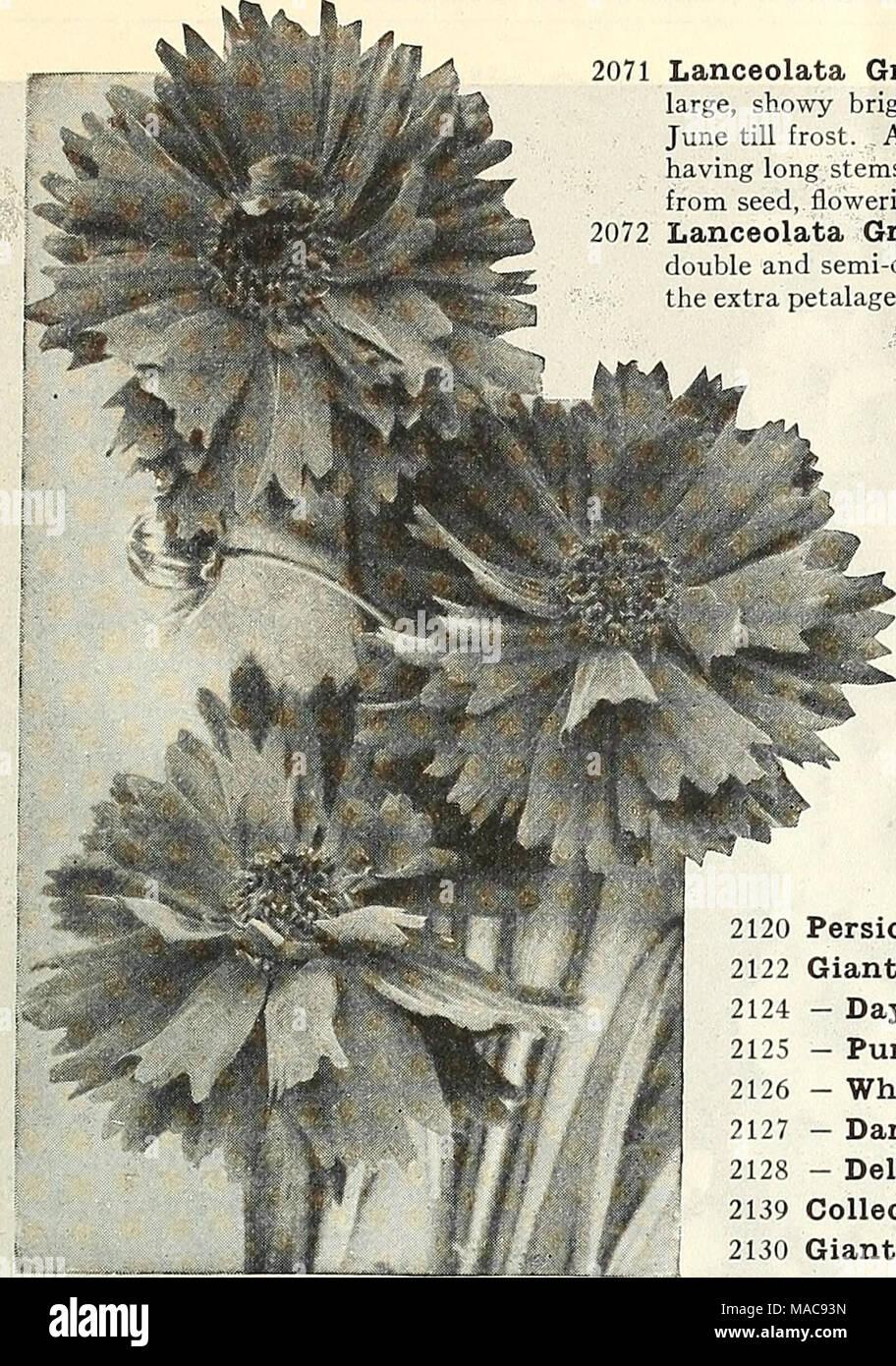 Dreers Midsummer List 1927 New Double Flowering Coreopsis