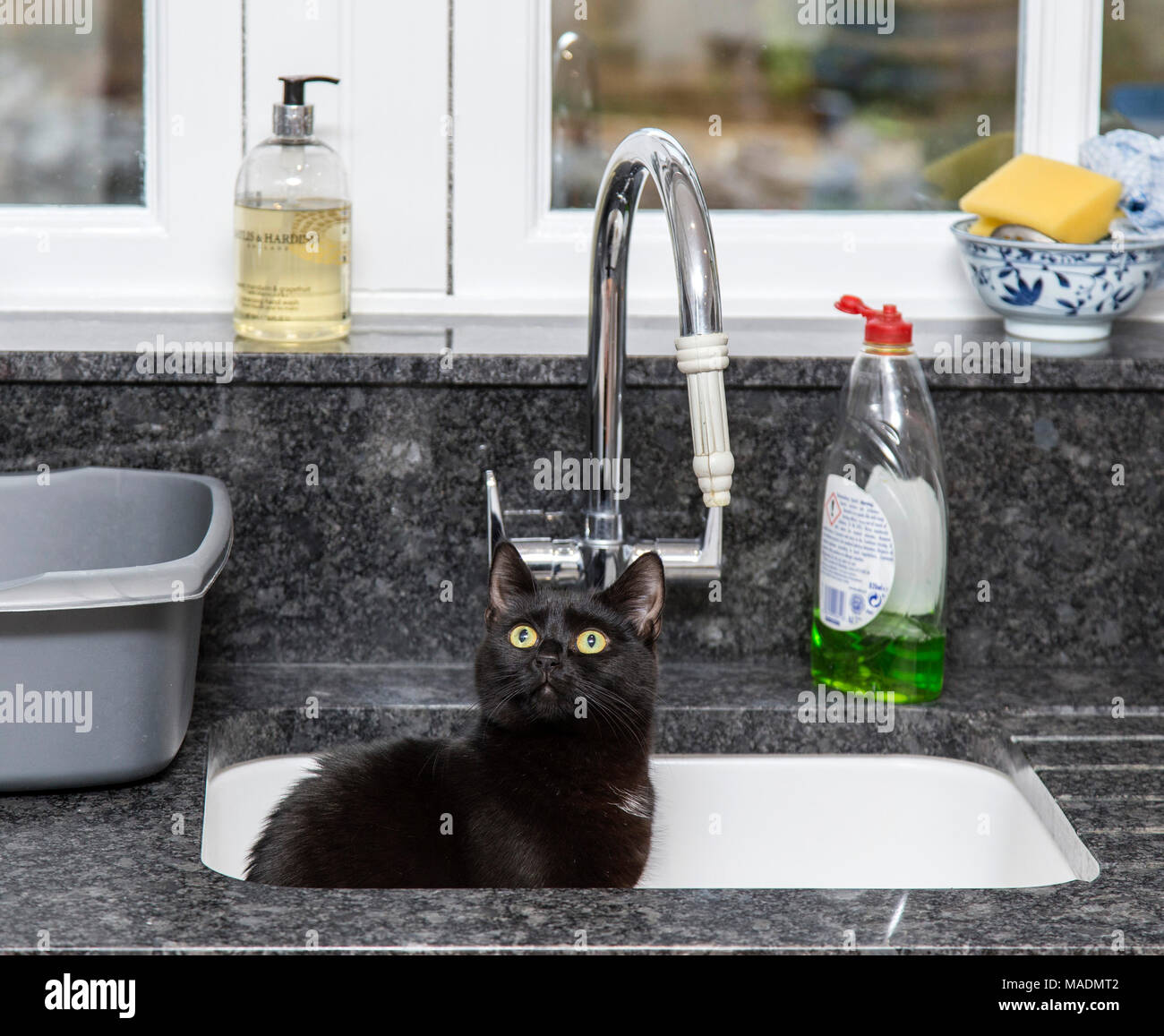 Black cat sat in a kitchen sink Stock Photo