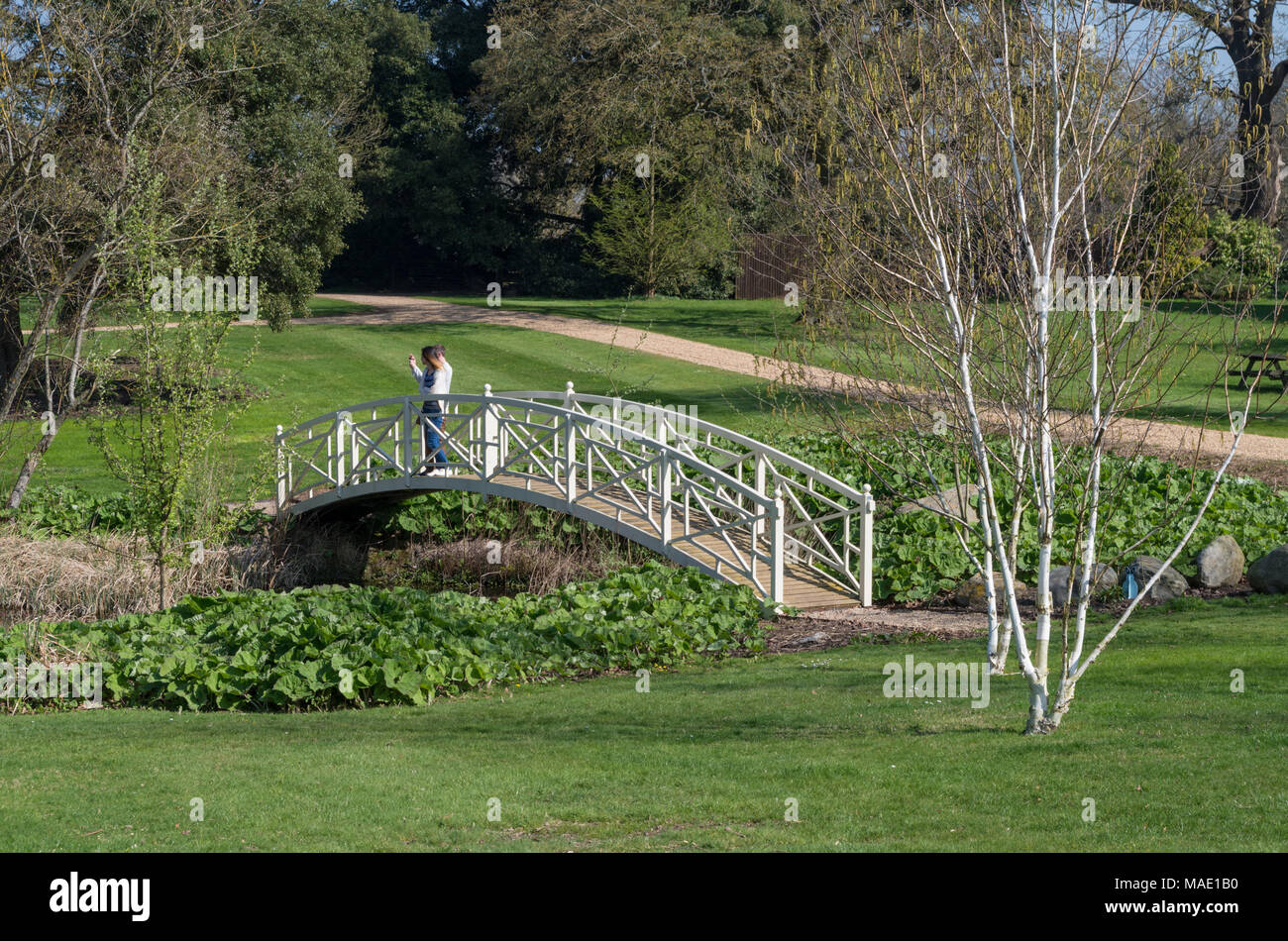 Young Couple Standing On A White Bridge Designed In The Chinese Style Which  Crosses The Bog Garden At Woburn Abbey Gardens, UK