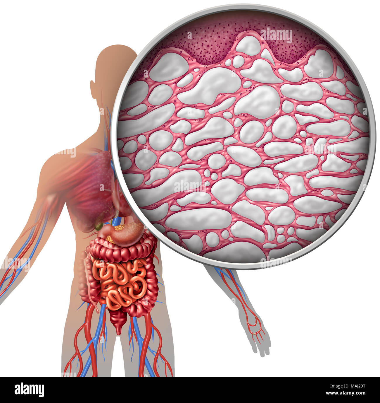 Interstitium Human Body Anatomy With Organs Concept As Connective
