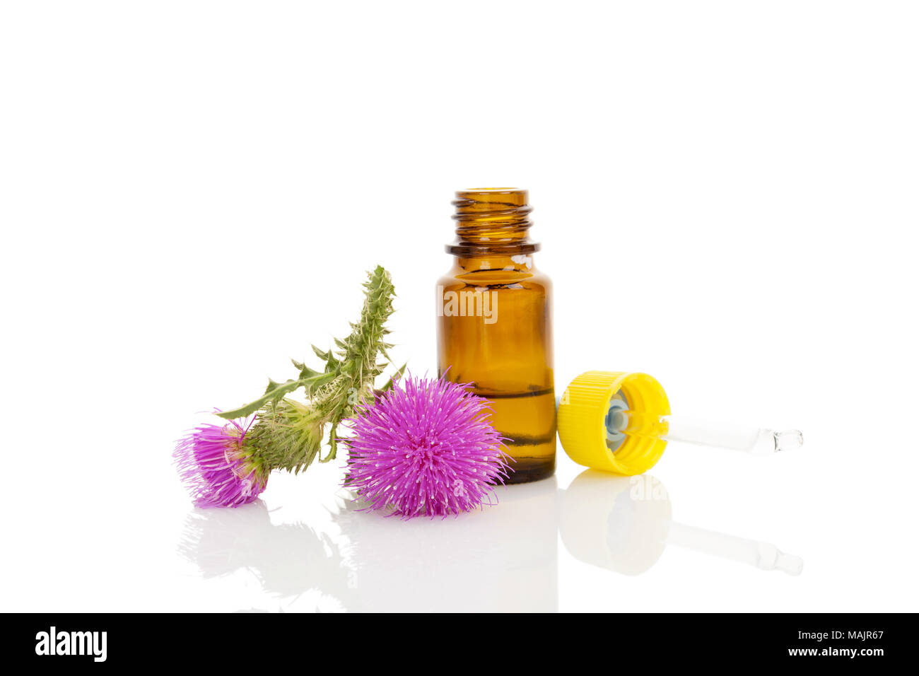 Medicine Carduus Flower Oil In Dropper With Carduus Flowers Isolated