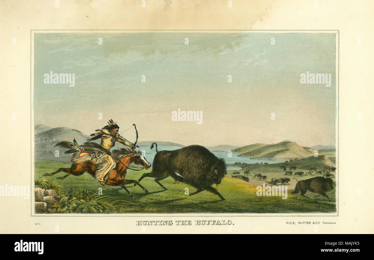 Horizontal hand-colored lithograph frontispiece for Volume 1 of History of the Indian Tribes of North America, published by Thomas L. McKenney and James Hall, showing an American Indian riding a horse aiming a bow and arrow at a buffalo, which is already wounded by an arrow. In the background other figures hunting buffalo can be seen. Title: 'Hunting the Buffalo.'  . 1836. Peter Rindisbacher - Stock Image