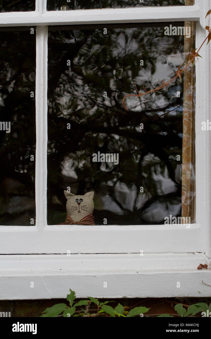 A soft toy cat looks out of a sash window reflecting a tree - Stock Image