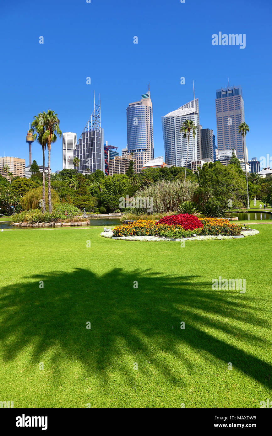 Great Sydney City Skyline And CBD And The Royal Botanic Gardens With Palm Tree  Silhouette, Sydney, New South Wales, Australia