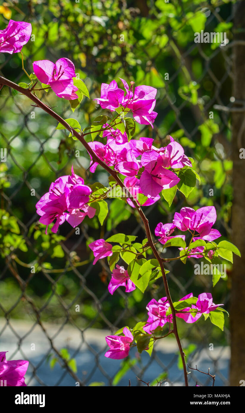 Nice Bougainvillea Paper Flower Contemporary - Wedding and flowers ...