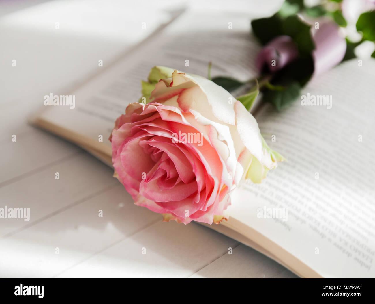 Beautiful rose flower on open book on white wooden background beautiful rose flower on open book on white wooden background romantic and love concept izmirmasajfo