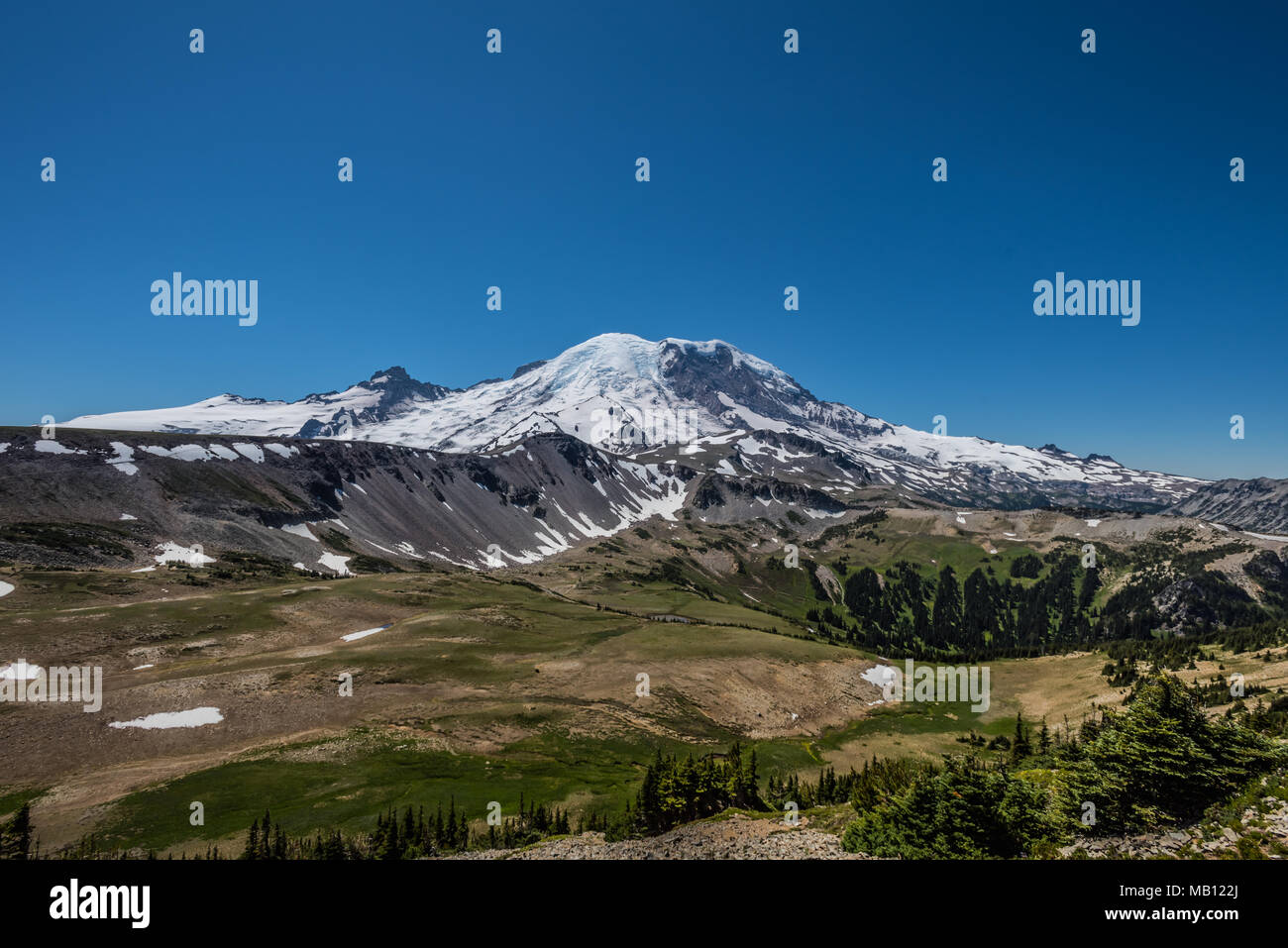 Snow Covered Mount Rainier and Grassy Meadow Below in summer - Stock Image