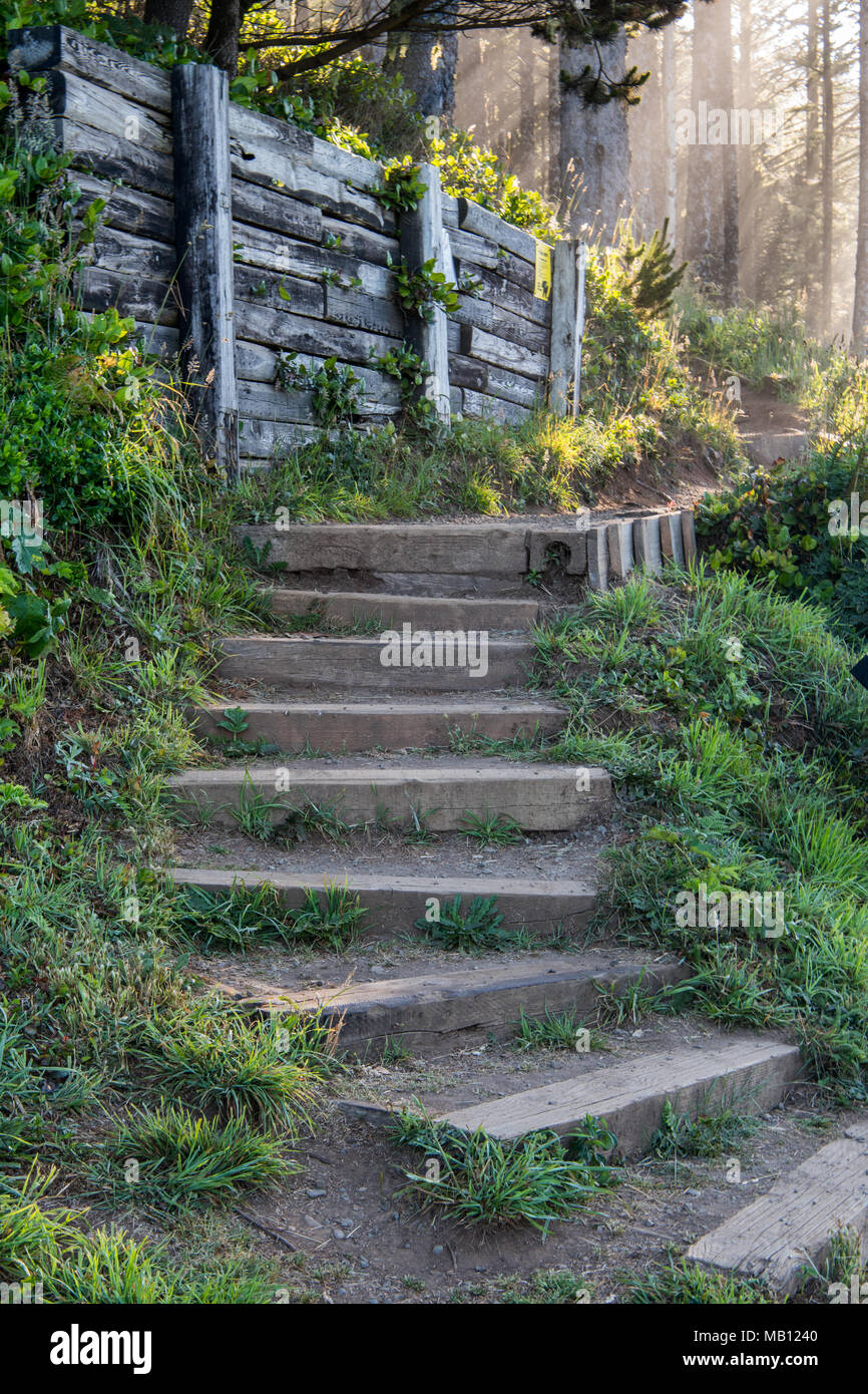 Stairs Wind Up a Trail Into Pine Forest with early morning sunlight streaming through - Stock Image