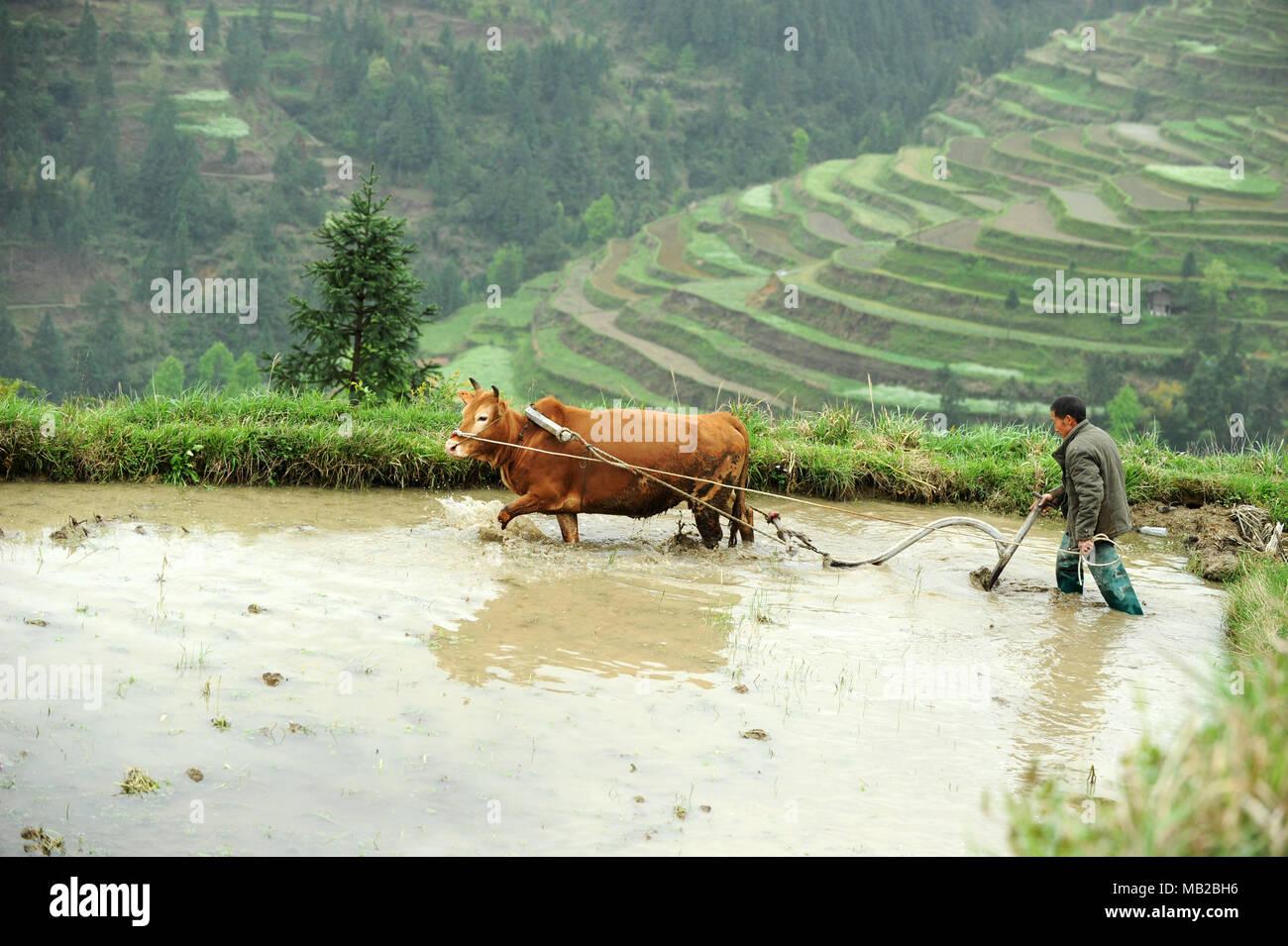 Jinping, China's Guizhou Province. 6th Apr, 2018. A farmer ploughs the field at Dongzhuang Village of Guben Town in Jinping County, southwest China's Guizhou Province, April 6, 2018. Credit: Yang Wenbin/Xinhua/Alamy Live News - Stock Image