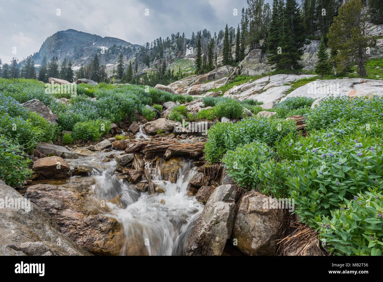 Water Flows Through Spring Flowers in Grand Teton National Park - Stock Image