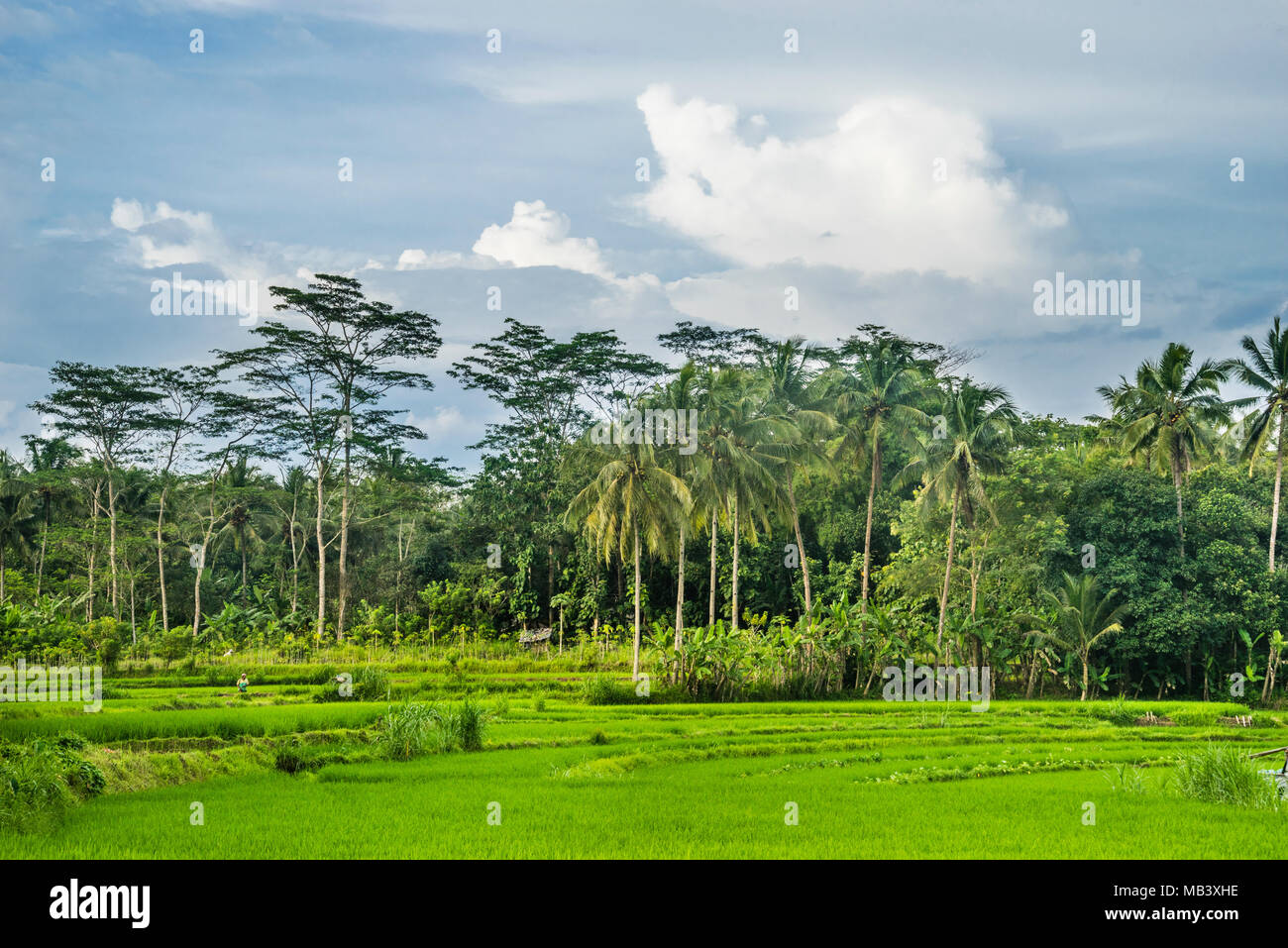 fertile rural countryside in the Kedu Plain west of Borobudur, Central Java, Indonesia - Stock Image