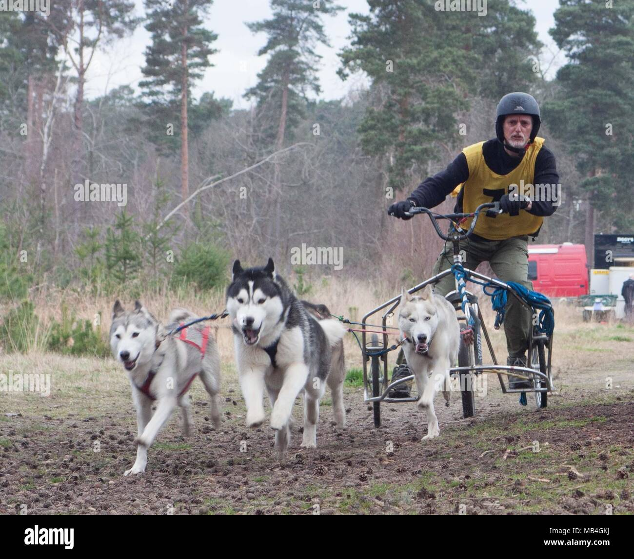Ascot, UK. 7th April 2018.  - Husky and Malamute Dog Sled racing Credit: Andrew Spiers/Alamy Live News - Stock Image