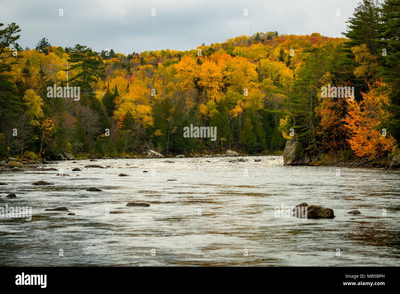 Autumn Colors Brighten up the Shore of the Penobscot River - Stock Image
