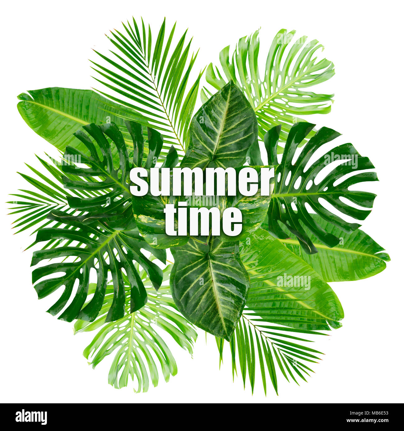 tropical green leaves with summer time words isolated on white