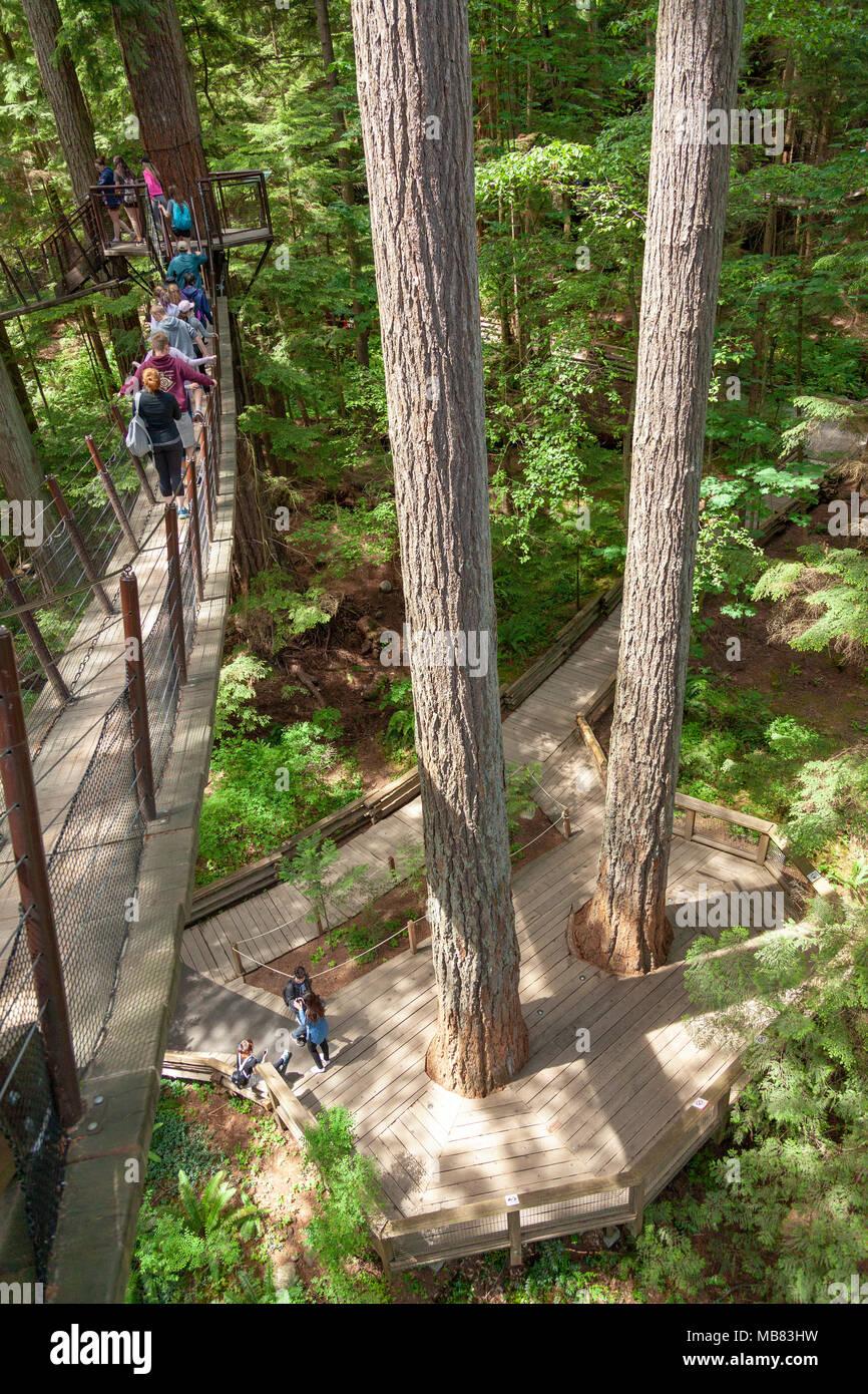 Capilano Suspension Bridge Park,Capilano Suspension Bridge Park Vancouver - Stock Image