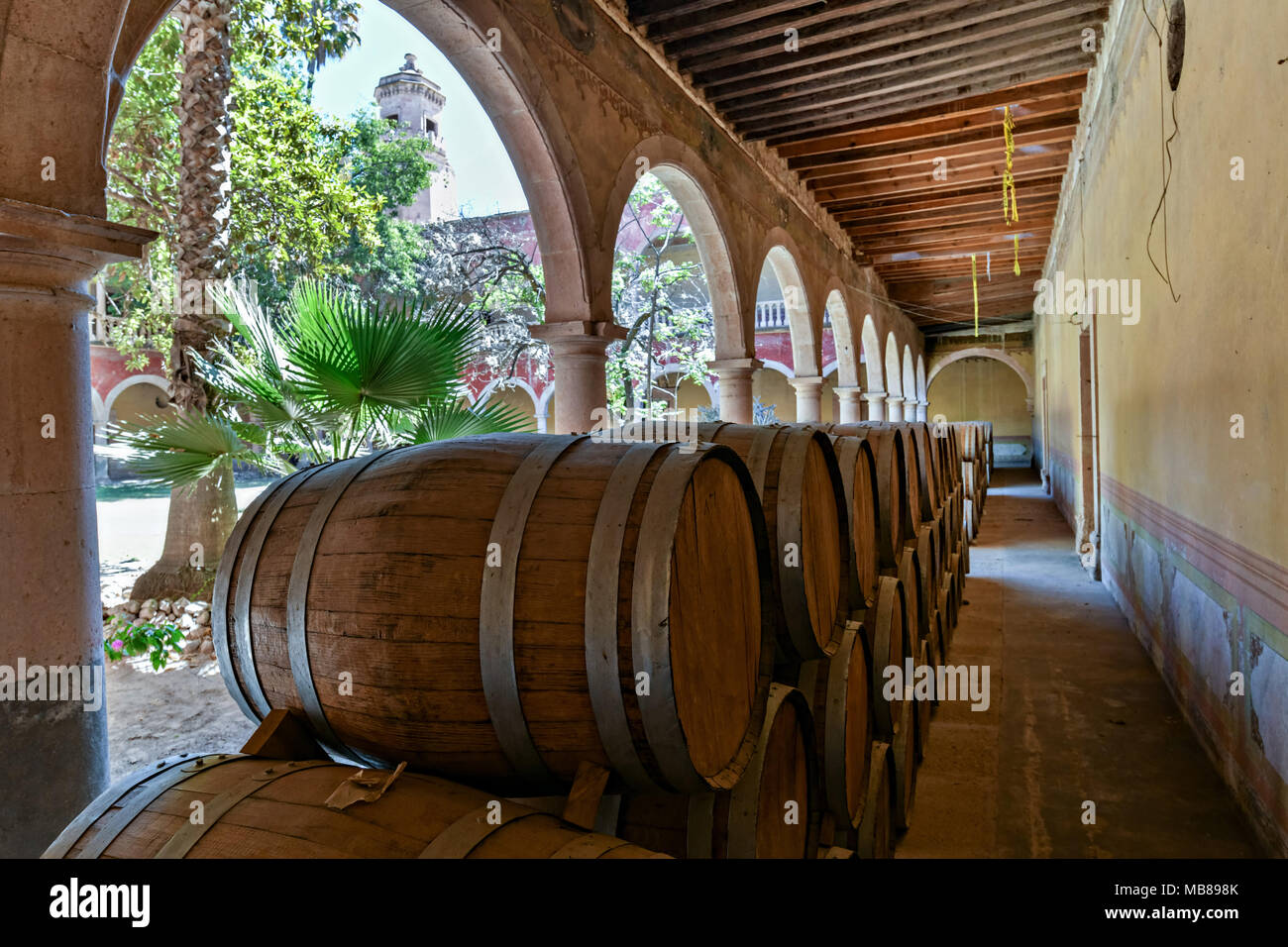 White oak barrels filled with Mezcal age under the derelict arches of the Hacienda de Jaral de Berrio in Jaral de Berrios, Guanajuato, Mexico. The abandoned Jaral de Berrio hacienda was once the largest in Mexico and housed over 6,000 people on the property and is credited with creating Mescal. - Stock Image