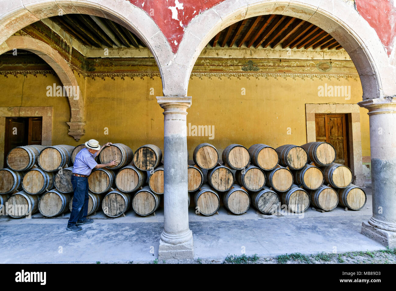 A man checks the oak barrels filled with Mezcal as they age under the derelict arches of the Hacienda de Jaral de Berrio in Jaral de Berrios, Guanajuato, Mexico. The abandoned Jaral de Berrio hacienda was once the largest in Mexico and housed over 6,000 people on the property and is credited with creating Mescal. - Stock Image