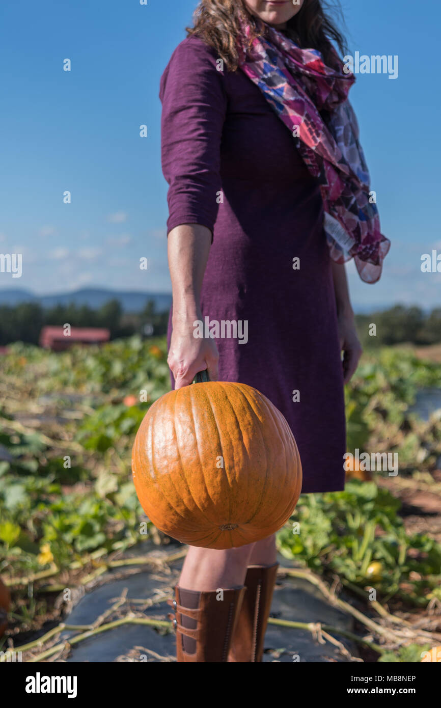 Carving Pumpkin Being Swung by Woman in Purple Dress at pumpkin patch - Stock Image