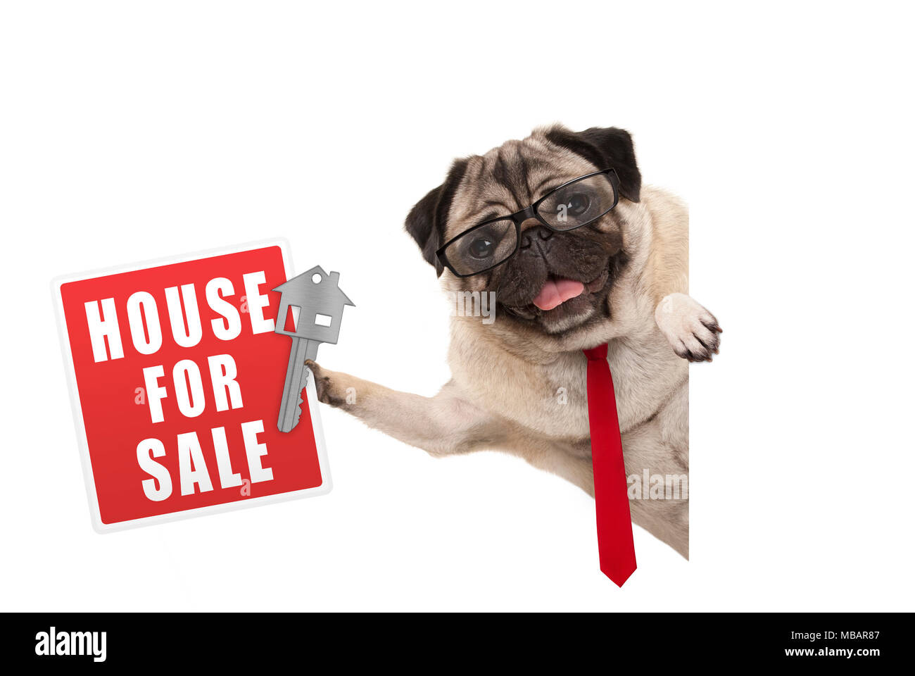 happy business pug dog witg glasses and tie, holding up red house for sale sign and key, isolated on white background - Stock Image