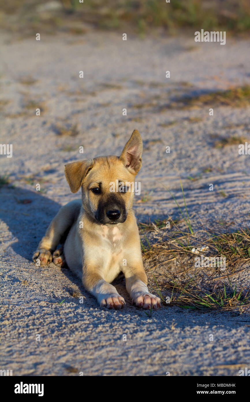 Rabies, homeless puppies in the morning - Stock Image