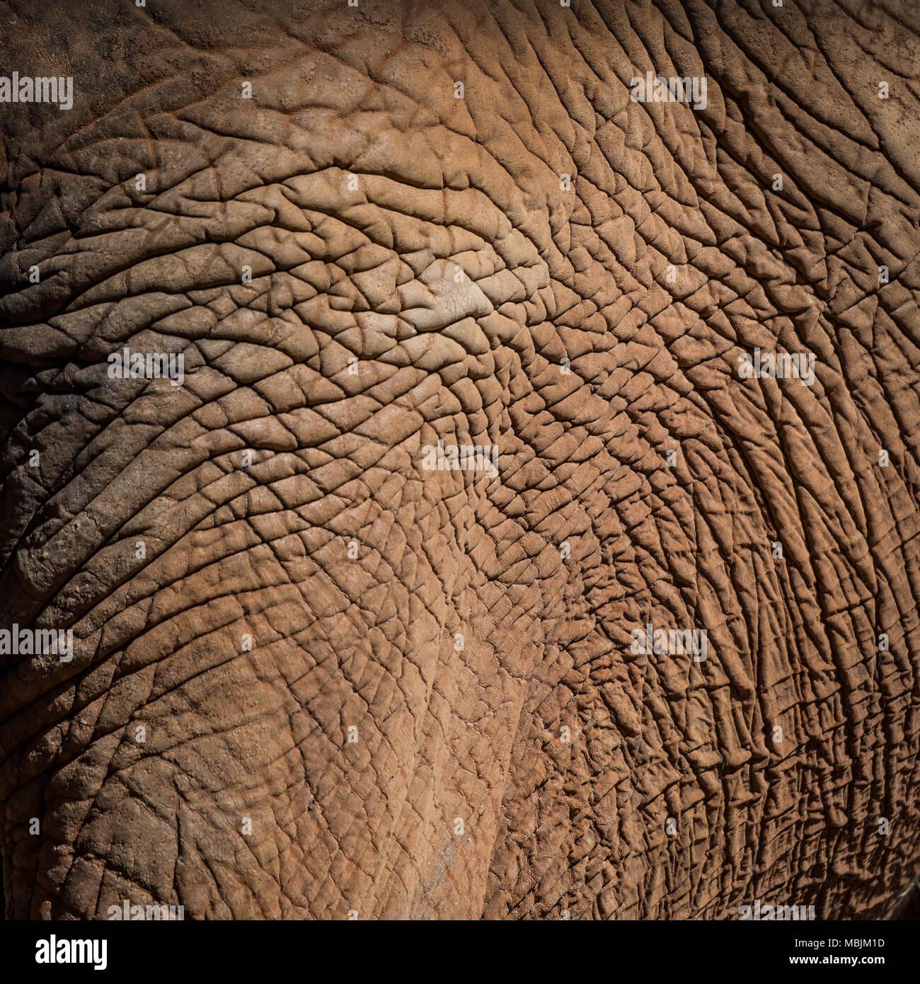 Elephant Skin Texture square background image - Stock Image