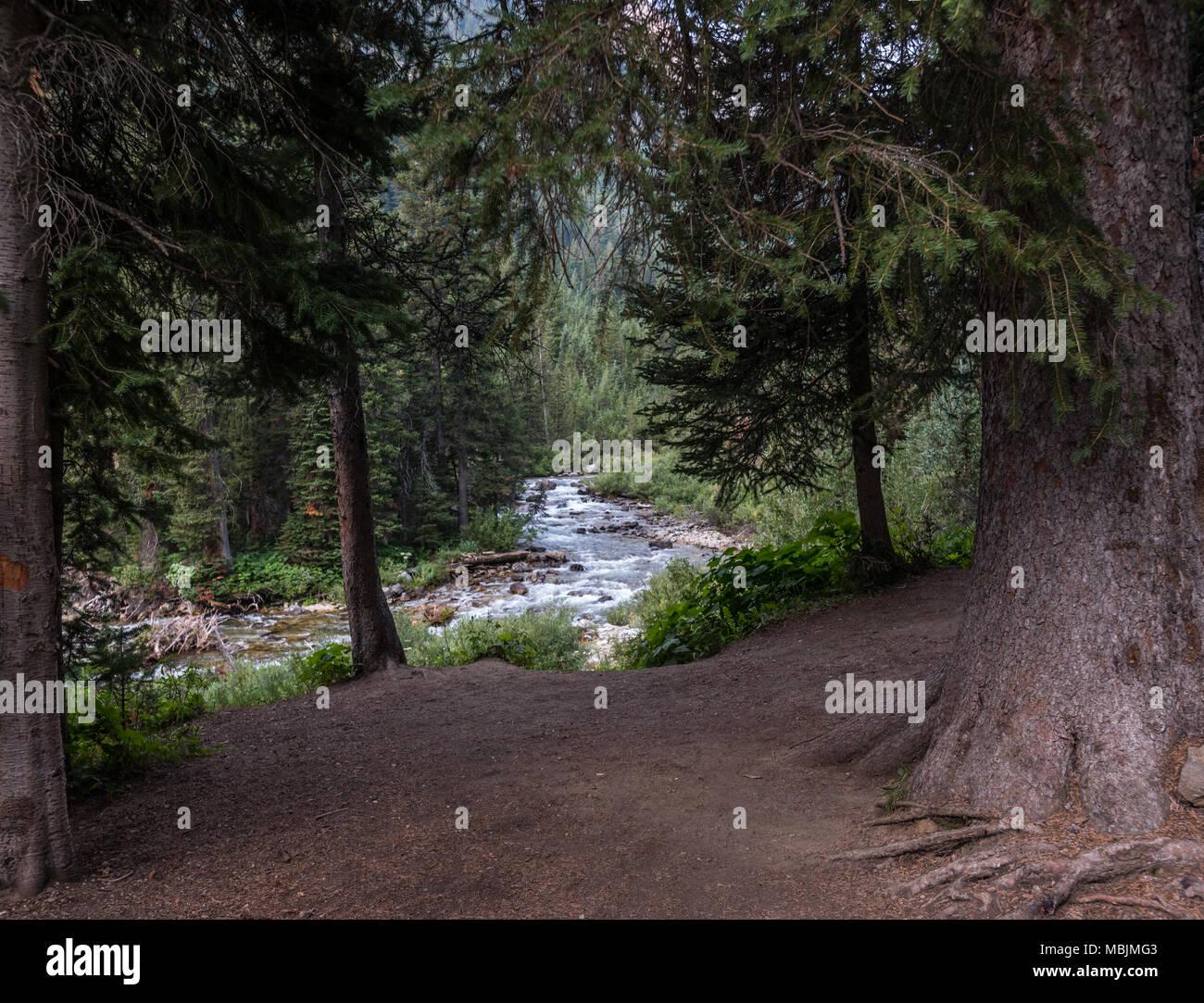 Grove of Trees Along Cascade Creek in Grand Teton wilderness - Stock Image