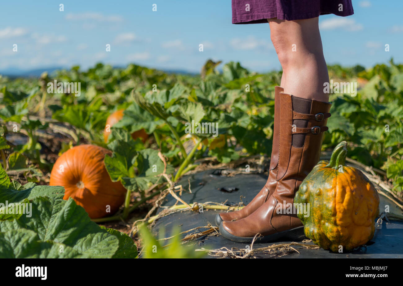 Heirloom Pumpkin at Feet of Woman with Straight Legs in Pumpkin Patch - Stock Image