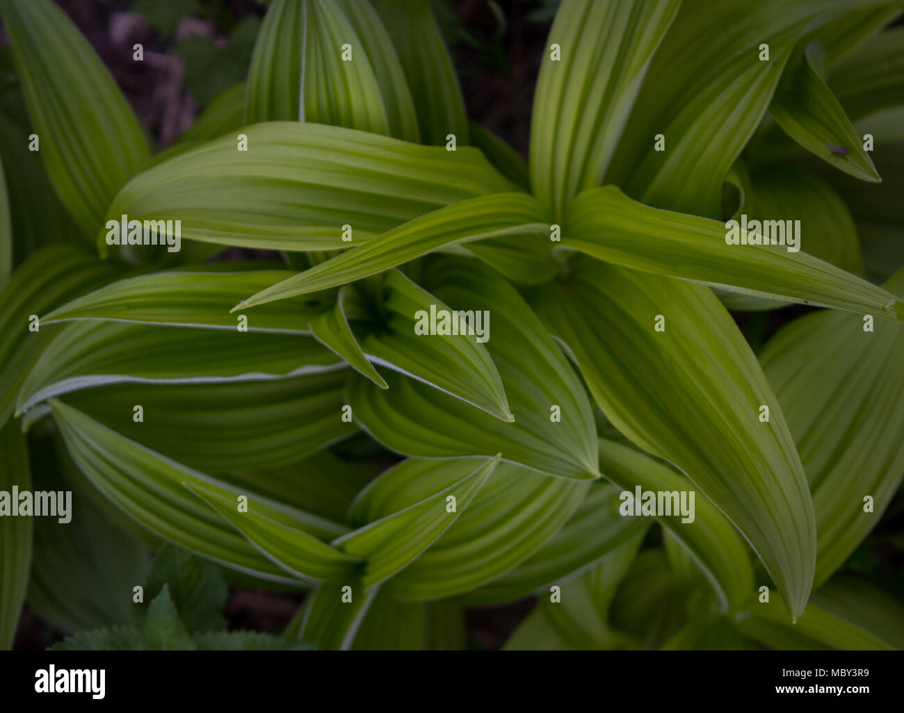 Looking Down on Green Leaves abstract nature image - Stock Image
