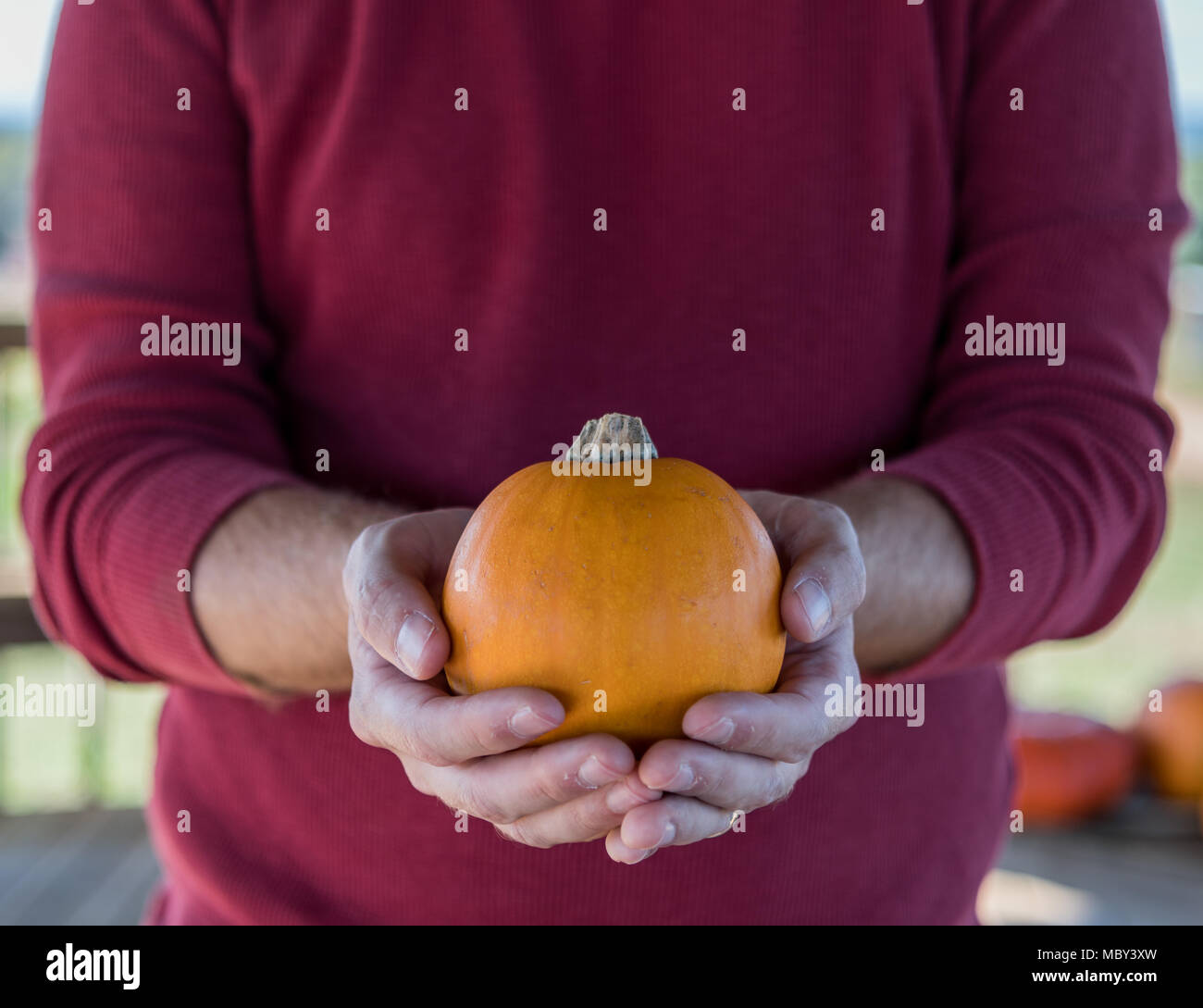 Man Holds Small Pumpkin in front of torso - Stock Image