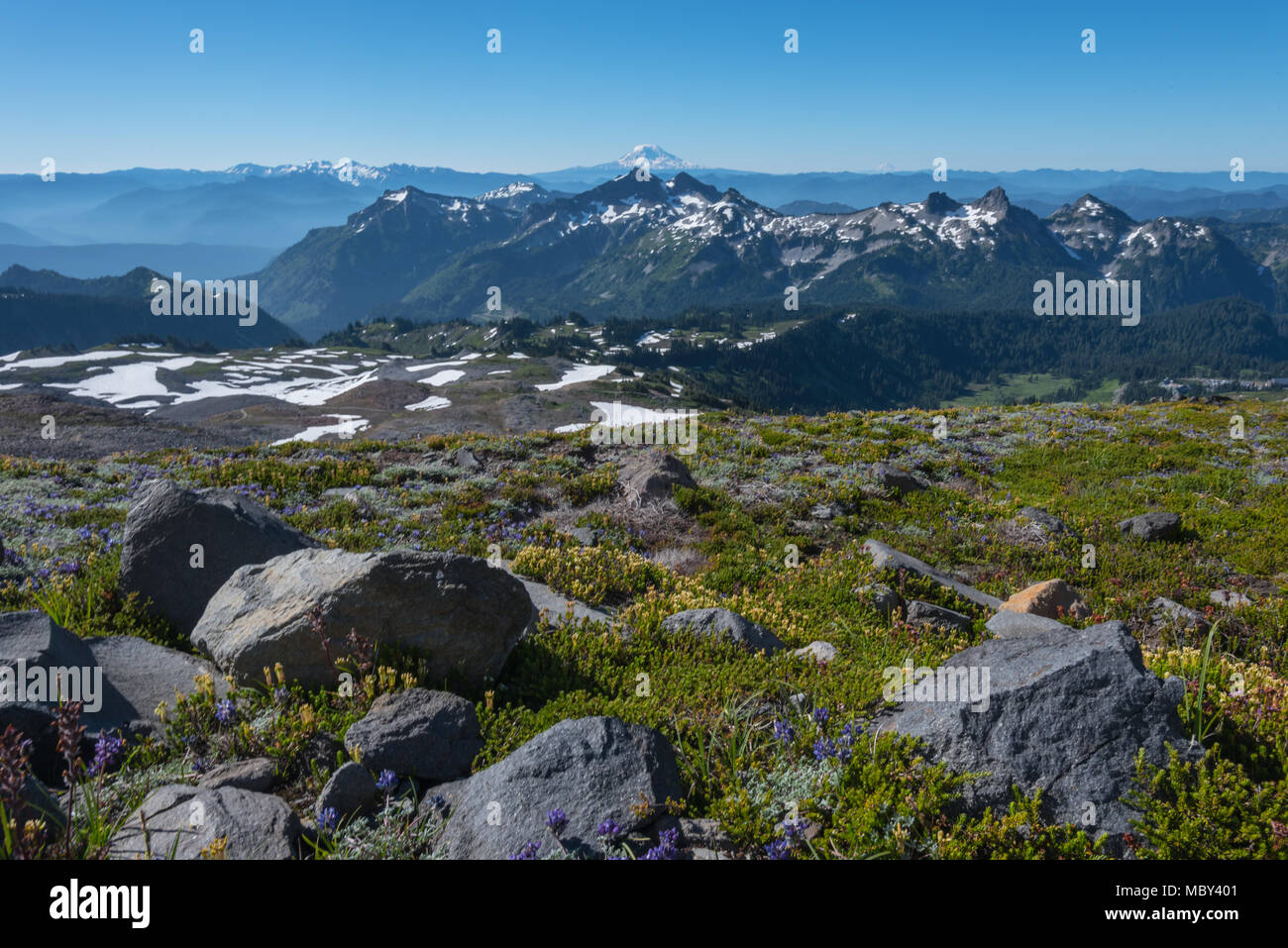 Mt Adams Looms Behind Wildflower Covered Moutains in Washington wilderness - Stock Image