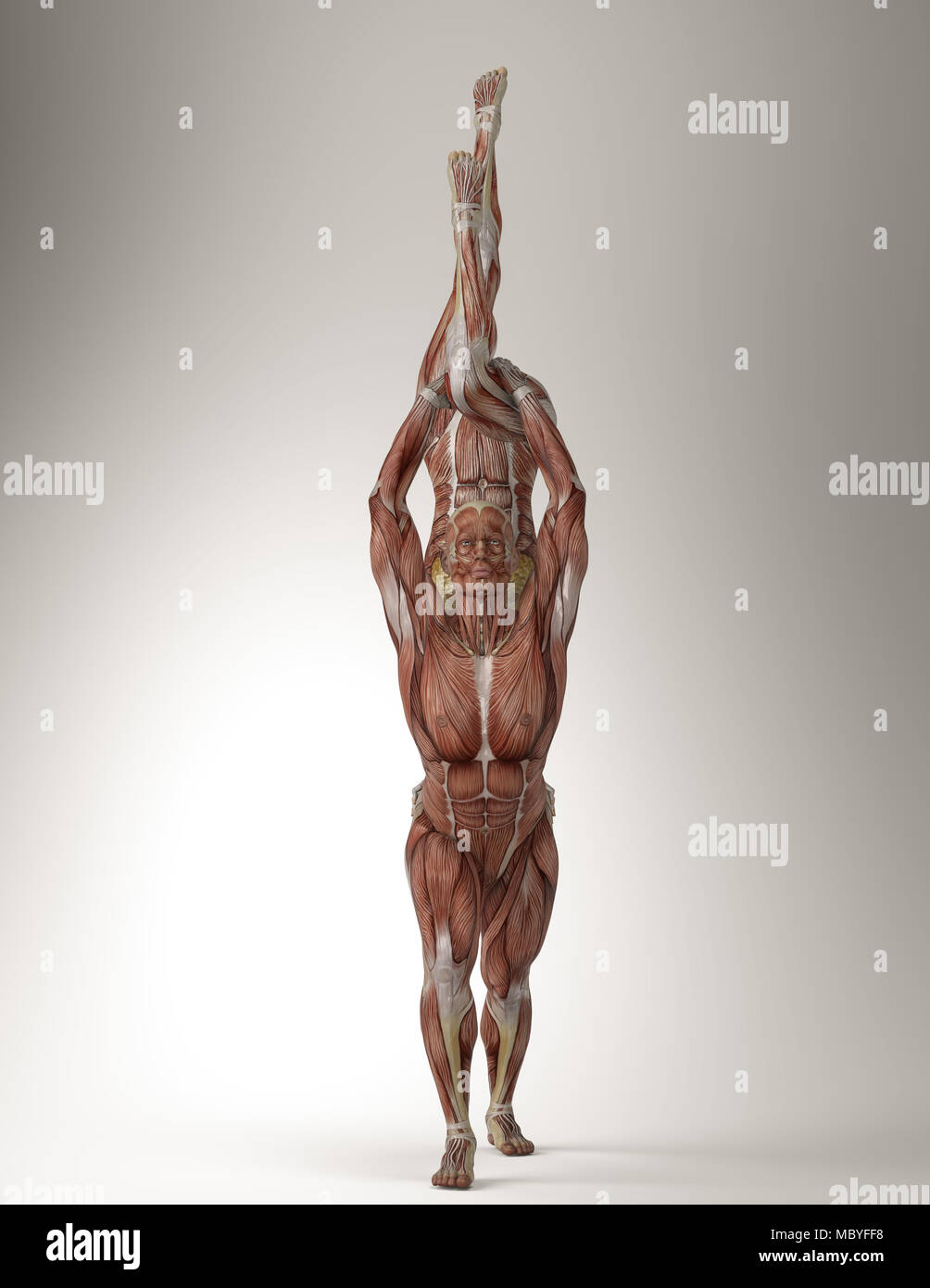 Couples yoga pose with male and female showing their muscle anatomy ...