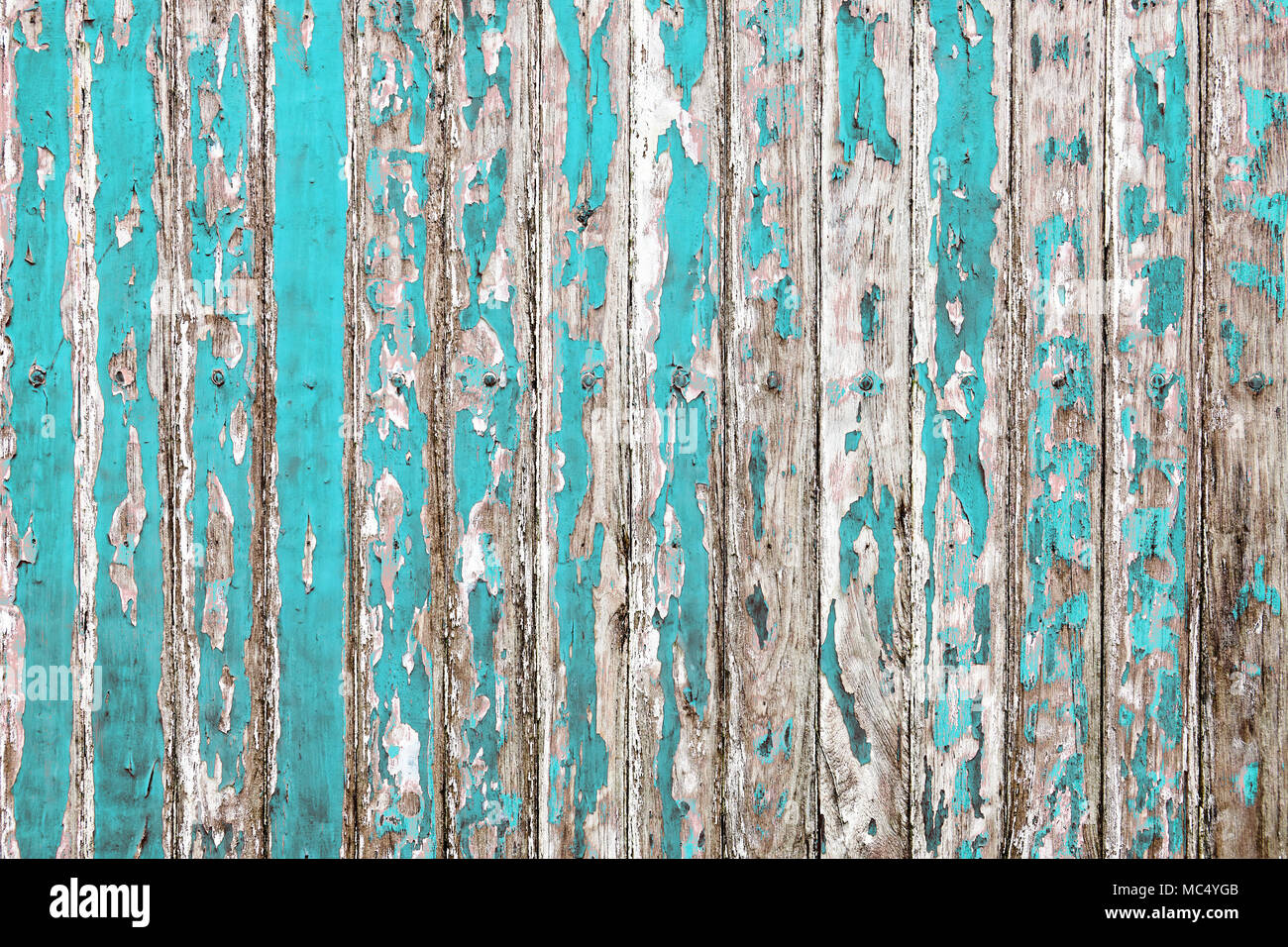 The Old Wooden Wall Painted With Cyan Color Cracking Peeling And Revealed Spike Nail Rustic Wood Texture