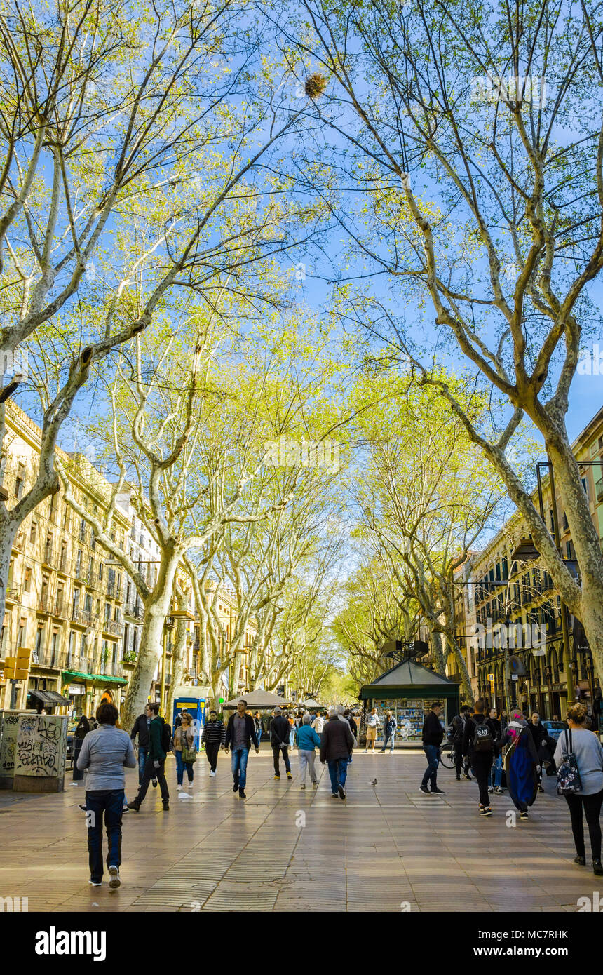 la-rambla-in-barcelona-busy-with-tourists-lined-by-trees-sprouting-into-leaf-the-road-is-flanked-by-shops-and-restaurants-MC7RHK.jpg
