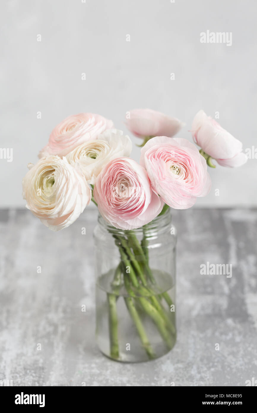 Persian Buttercup In Glass Vases Bunch Pale Pink Ranunculus Flowers Light Background Wallpaper