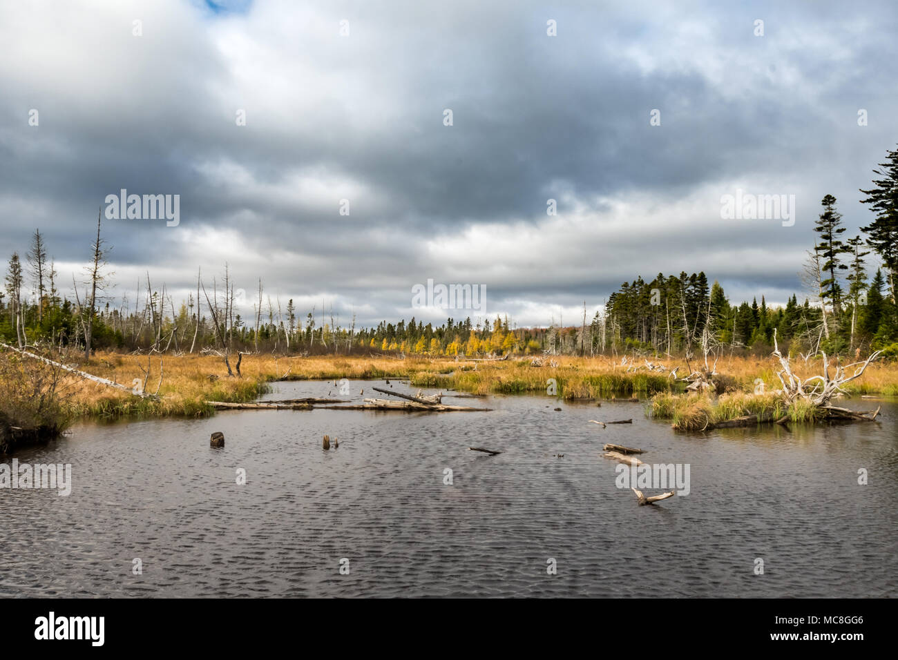 Small Pond in the Maine North Woods on overcast fall day - Stock Image