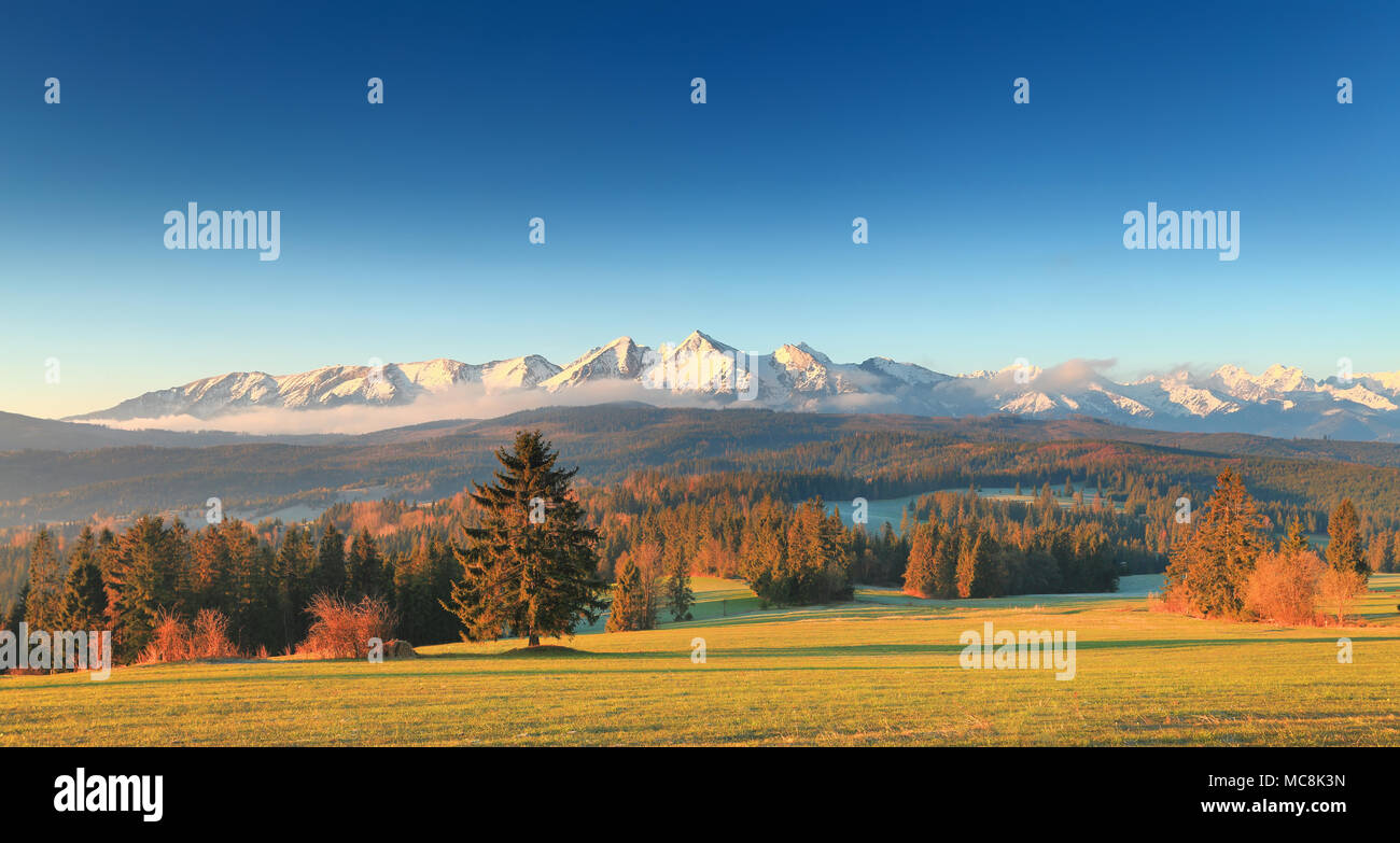 picturesque morning in tatras green valley on snowy mountain background sun shines at christmas trees at tatras foothills gorgeous summer landscape